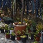 Засаждане на декоративни растения