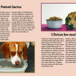 цветелина цокова 11клас списание_Page_4
